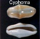 pour l'ambiance Cyphoma